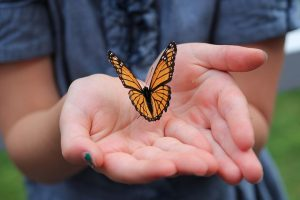 Close up of a butterfly sitting on a lady's cupped hands