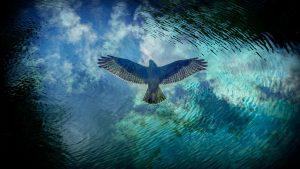 Soaring eagle flying towards the heavens