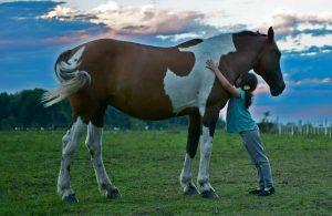 Young girl hugging a big horse