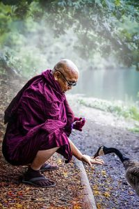 purple robed monk hand feeding a goose beside a stream